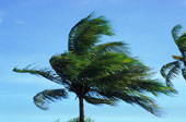 windy-palm