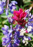 Mt. Rainier flora by Brad Young